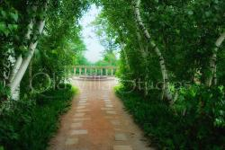 6000 BIRCH LINED WALKWAY